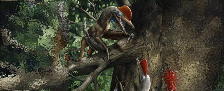 This Flying 'Monkeydactyl' Is The Only Known Pterosaur With Opposed Thumbs