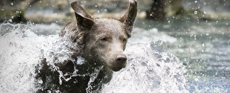 Curious Test Reveals Dogs May Have a Special Ability We Didn't Know About Before